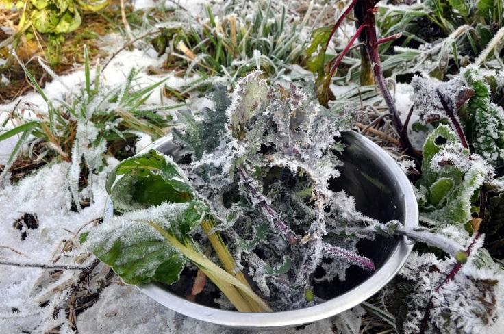frozen veg web